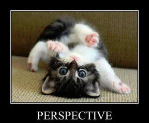 Cute little black and white kitten upside down.