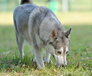 sniffing-dog-7799295